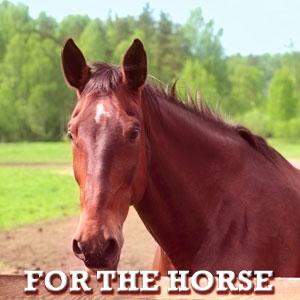 For The Horse